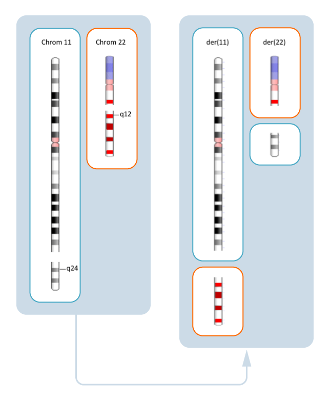 SB18RP-translocation-F4